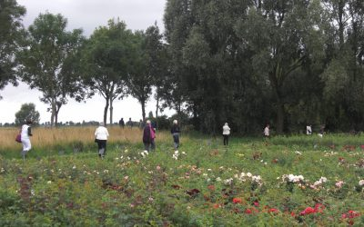 30-07-2011 – uitje naar Biologische Rozenkwekerij
